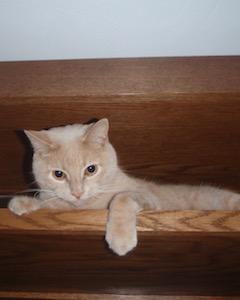 vet clinic cat